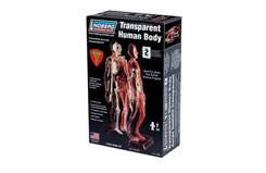 Lindberg 1/6 Transparent Human Body - ln71305