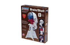 Lindberg Brain/Skull Half Kit - ln71306