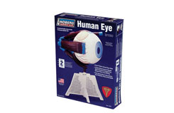 Lindberg 4/1 Human Eye Kit - ln71307