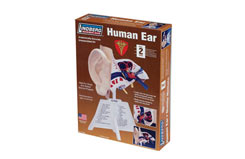 Lindberg Human Ear Kit - ln71308