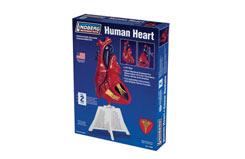 Lindberg 1/1 Human Heart - ln71309