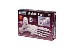 Lindberg 1/1 Skeletal Foot - ln71314